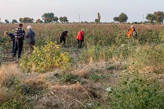 Baumwollfelder an einem Rastplatz der Route nach Sarmakand