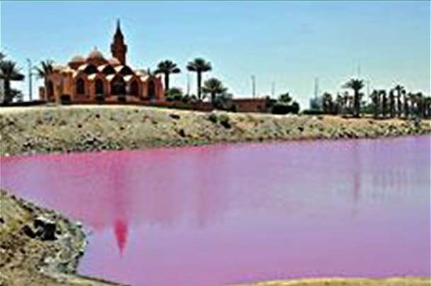 "3059 Why The Pink Lake in the heart of Jeddah turn ""Pink"" in Summer"