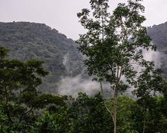 2018, Buhoma ,Bwindi Impenetrable Forest NP