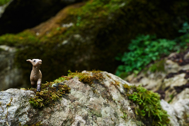 baby goat searches for Badger's Cave so he can escape from Lord Broghill at Blarney Castle.