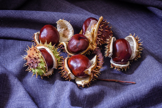 Fresh horse chestnuts in, Canon EOS 600D, Canon EF-S 18-55mm f/3.5-5.6 III