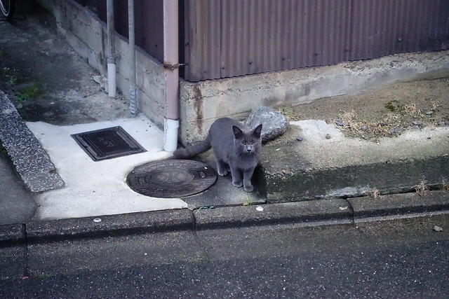 Today's Cat@2018-12-09