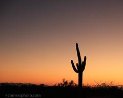 Venus and Saguaro Cactus, Pima County, AZ