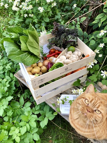 årstiderna organic vegan food box ambassador, september 2018 -