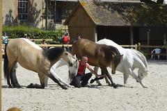 2018.06.21.131 HARAS du PIN - Toma et ses chevaux  de la Cie Atao - Photo of Saint-Germain-de-Clairefeuille