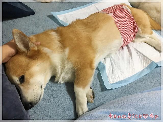 噴噴的血管肉瘤(11)二次輸血+標靶治療