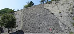 Ammonites (Coroniceras multicostatum) - Dalle aux Ammonites (Digne-les-Bains, Francia) - 03