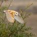 Barn Owl (X8A_7358-1) by Eric SF