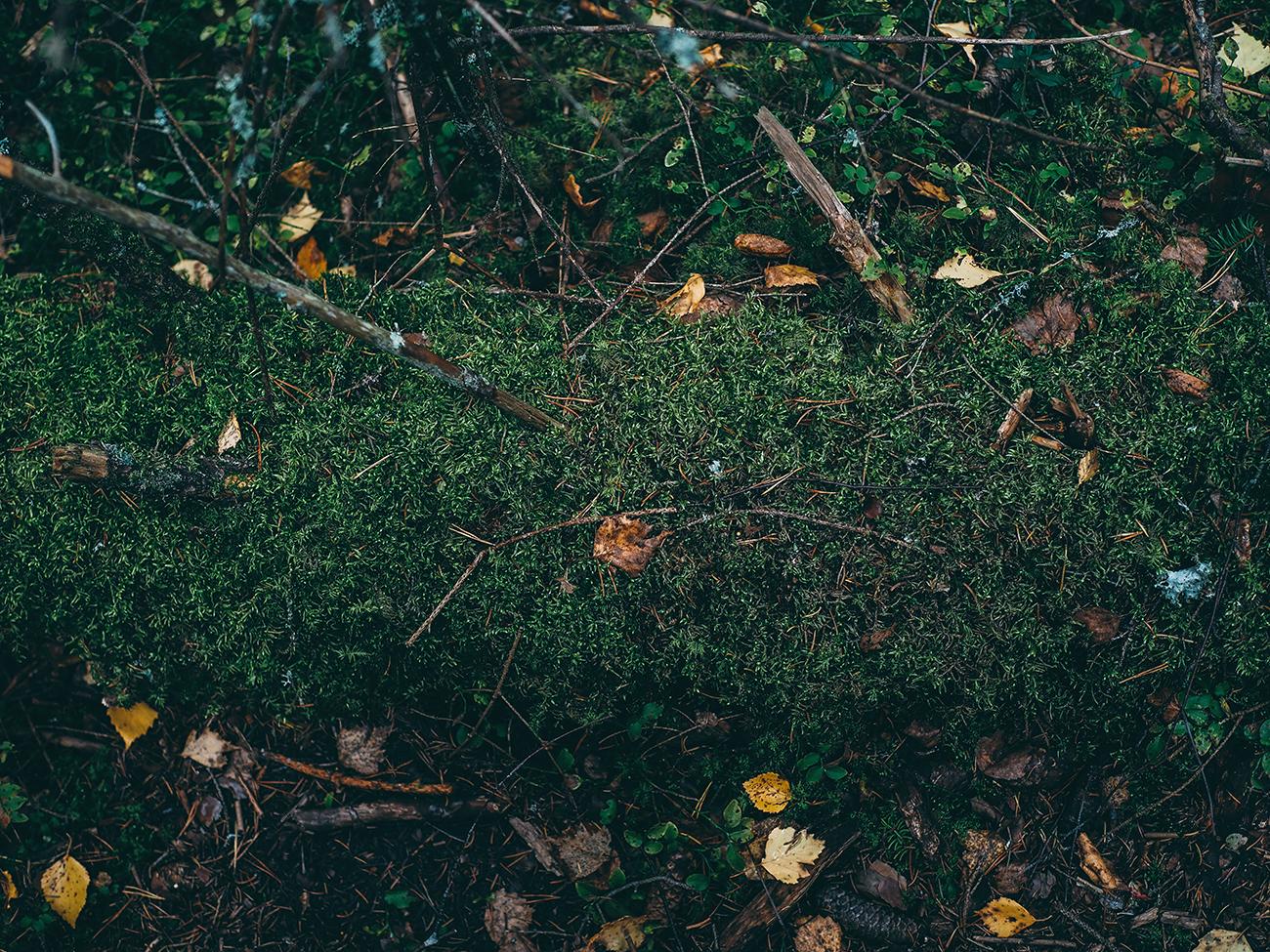 luonto9