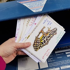 Penultimate pile of #PostcardsToVoters