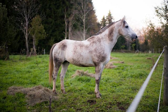 20181003 Muddy Horses_8
