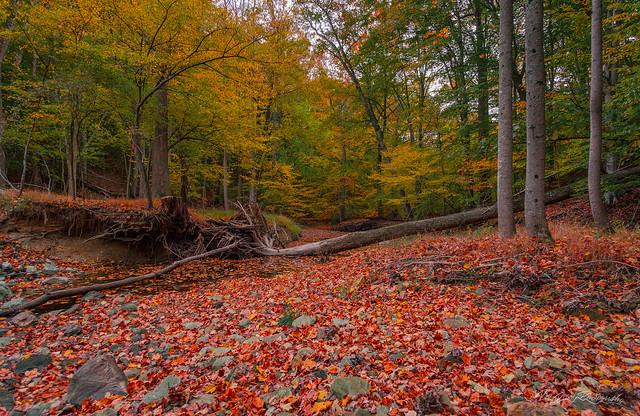 Buck Branch Runs Dry
