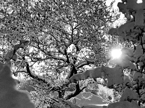 Winter sunshine (buckaroos70)
