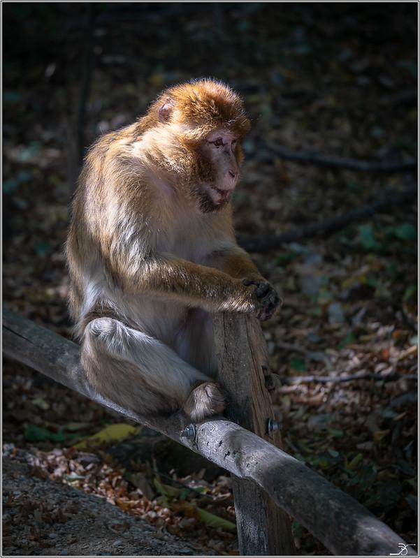 Terre des singes part3 45004273231_b4a9184957_c