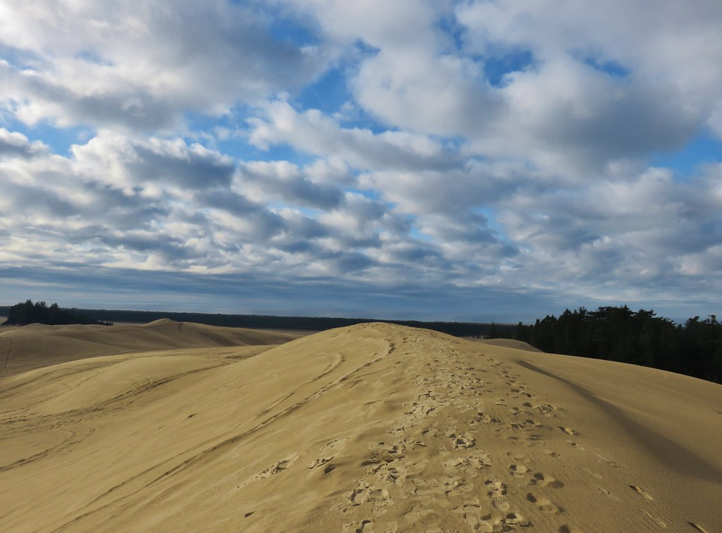 View from the tallest dune in Jessie M. Honeyman State Park