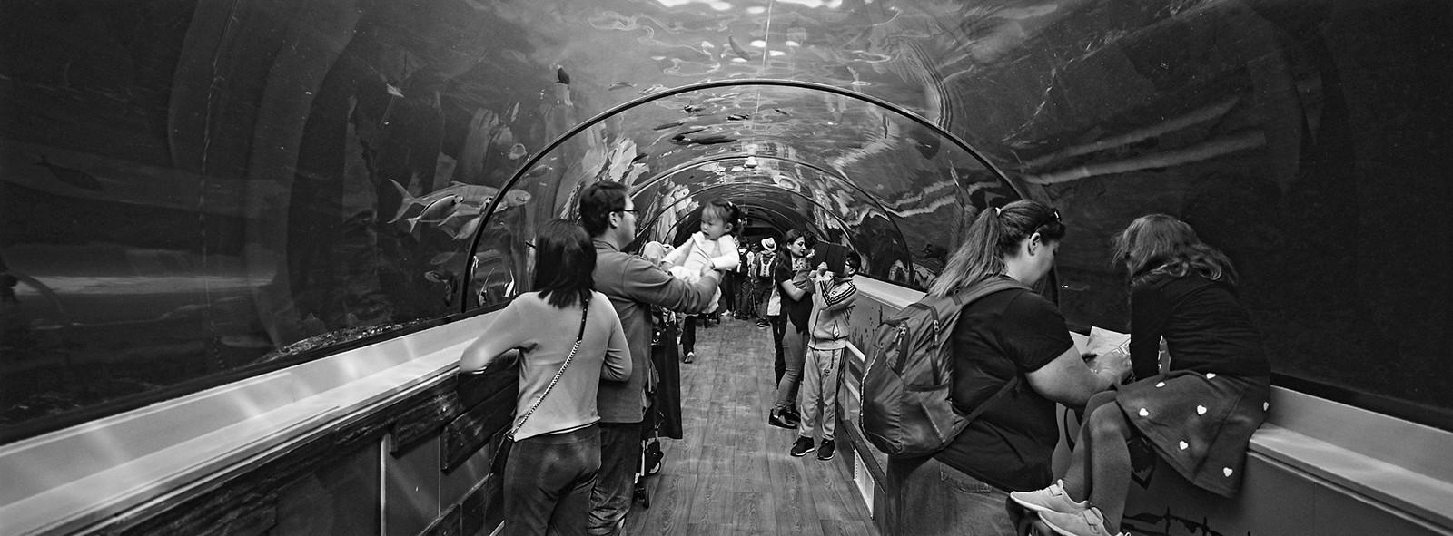 Sydney Aquarium viii
