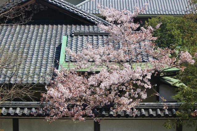 nishiarai019