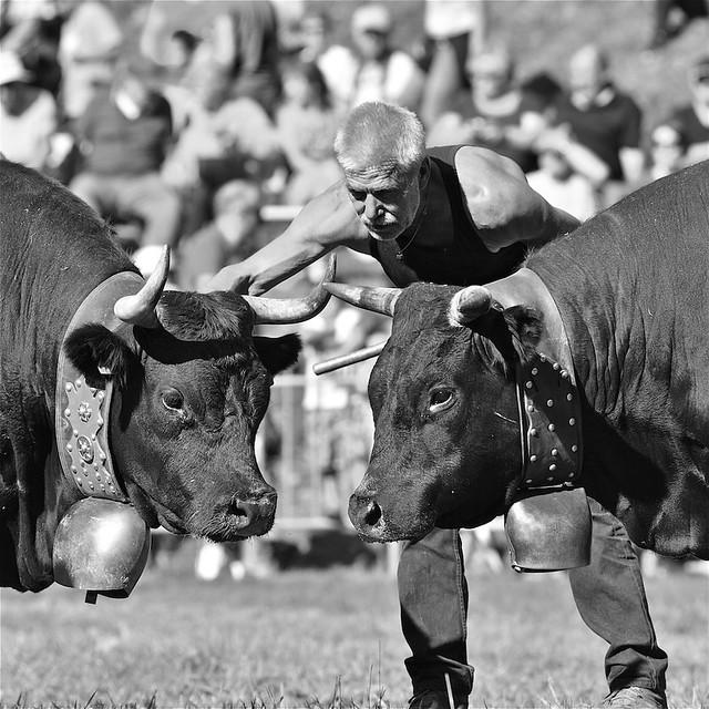 Mon regard en n&b sur la fête des vaches d'Hérens du 23/10/2018 au Contamines