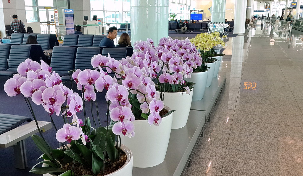 Orchids in Terminal 2, Incheon International Airport