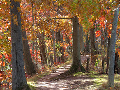 autumny path