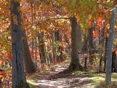 autumny path