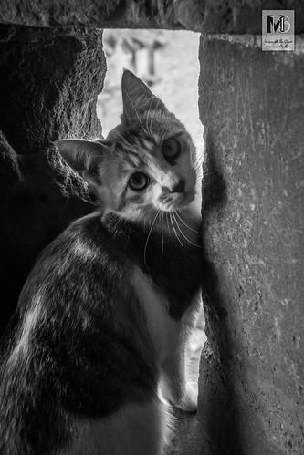Curioseando desde el Castillo de Sabiote