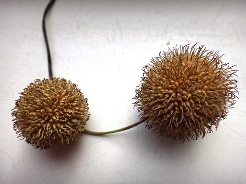 Семена из Крыма
