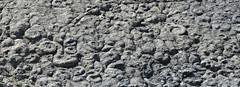 Ammonites (Coroniceras multicostatum) - Dalle aux Ammonites (Digne-les-Bains, Francia) - 04 - Photo of Champtercier