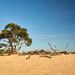 20181005 - DSC09996 - Het Nationale Park De Hoge Veluwe