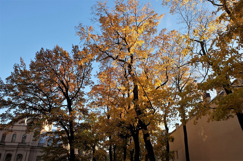 Золотая осень и Новая Голландия