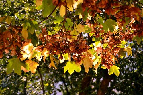 Dettagli d'autunno in Castelbasso, frazione del Comune di Castellalto in provincia di Teramo