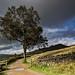Lone Birch Tree at Dove Stone