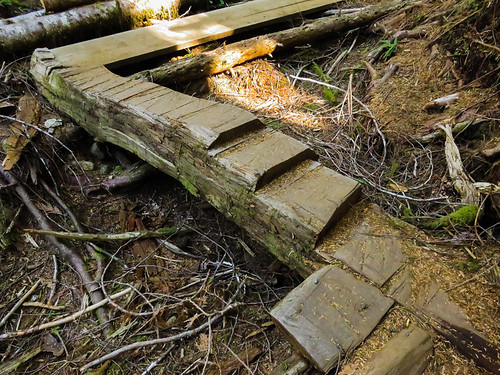 Trail made up of sawn steps in a whole log in Avatar Grove near Port renfrew on Vancouver Island, Canada