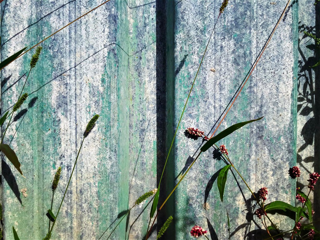 weeds against green metal fence