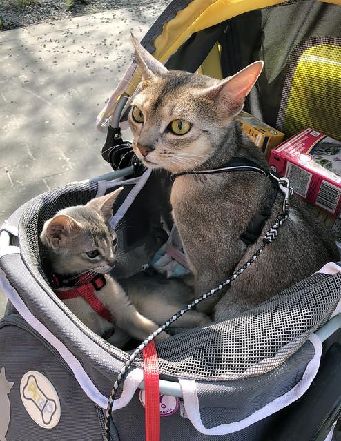 roryfreddy-stroller_3280