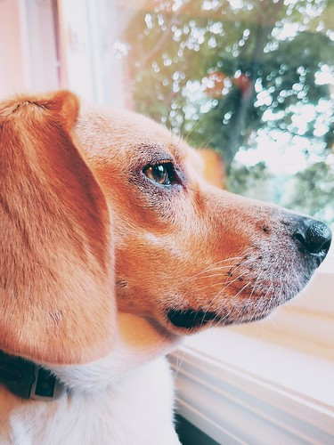 Doggy looks out the window.