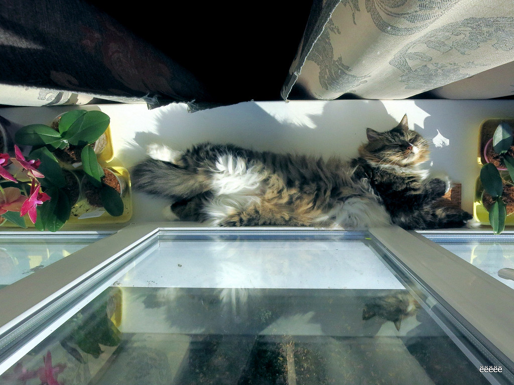 Sun, this is for cats)