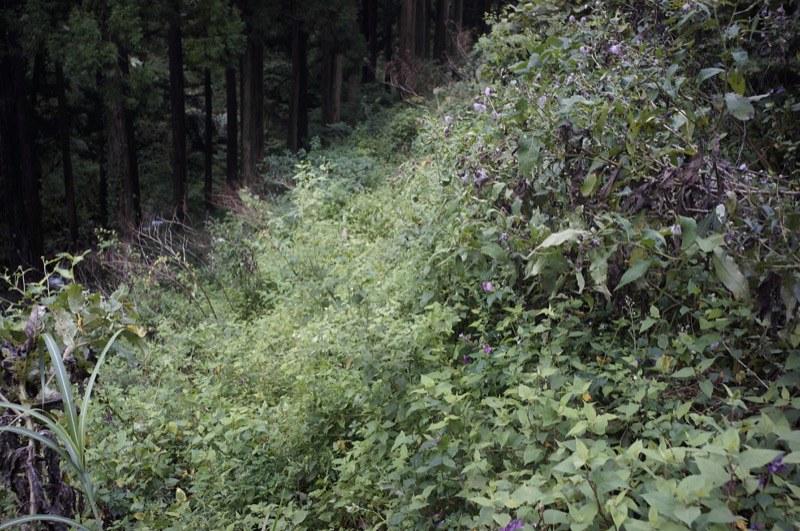 Mt. KITIJIYAMA