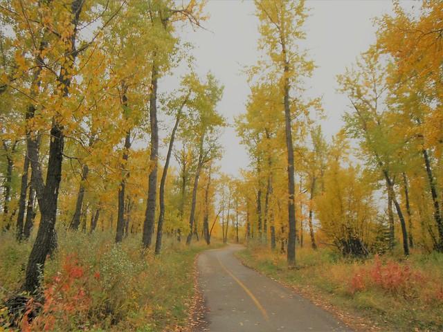 Autumn Bow River Parkway, Fujifilm FinePix XP20