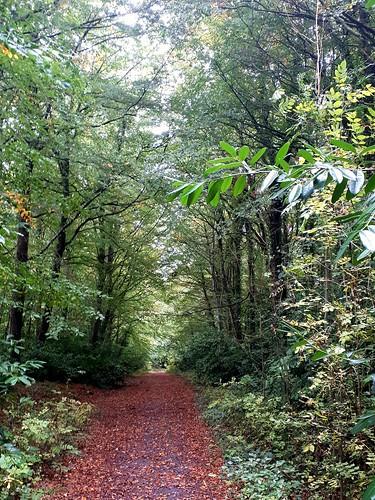 Kilfane Wood
