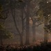 Autumn in the Trees by Chaitanya Deshpande | Photography