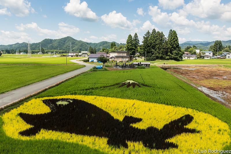 Arte en los campos de arroz desde la línea Akita Nairiku