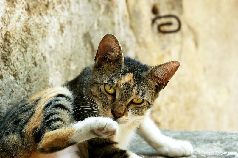 Кот с которской улицы