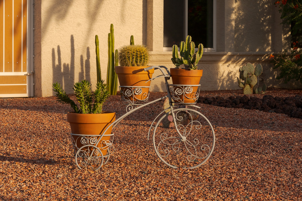 An iron bicycle is adorned with three types of cactus in the front yard of a house in the Buenavante neighborhood of Scottsdale, Arizona