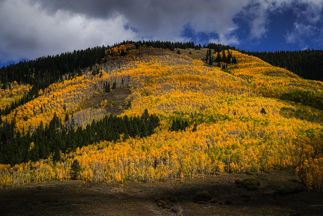 Yellow - Colorado
