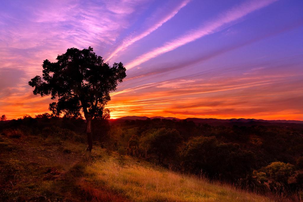 Sunset Among The Cork Oaks