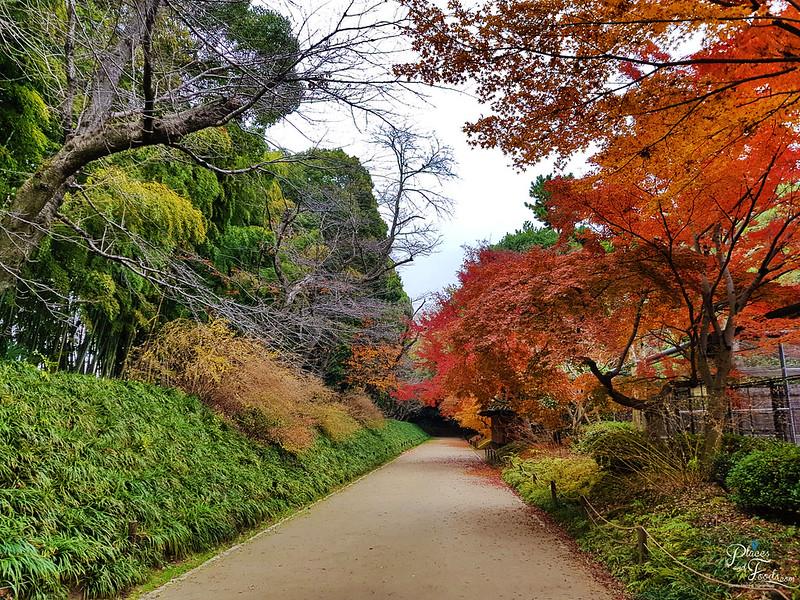 okayama korakuen autumn view