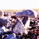 2018:10:05 15:12:48 - Stone Beach Bokeh  - Fehmarn - Schleswig-Holstein - Germany