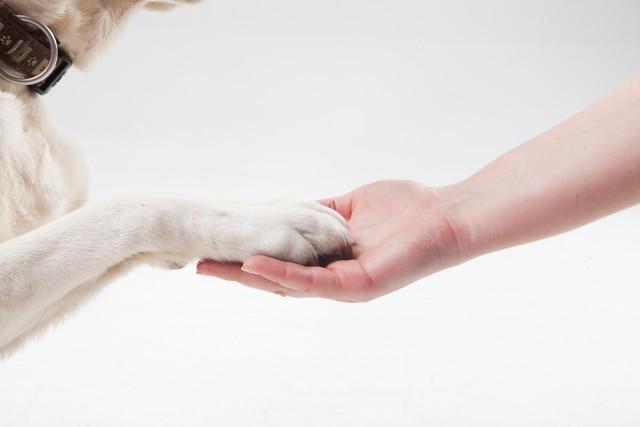 犬が嫌がらないお手の教え方