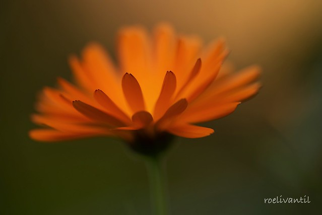 Orange in the garden